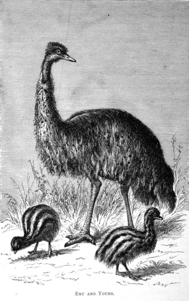 An Ornithological Disaster: Thomas Nevin'semu1878 (4/6)