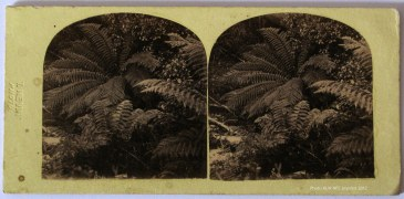 T. Nevin Photo impress on stereo of ferns