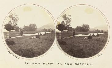 Salmon pondsTasmania 1868